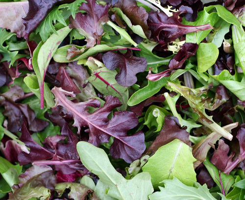 Spring Mix For Your Menu